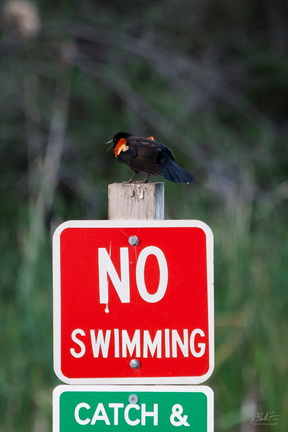 I Said, NO SWIMMING!
